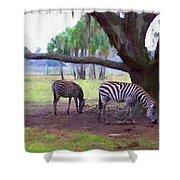 Zebras Under Oaks Shower Curtain