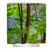 Zen Forest Shower Curtain