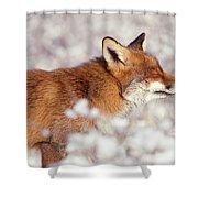 Zen Fox Series - Happy Fox IIn The Snow Shower Curtain