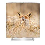 Zen Fox Series - Zen Fox 2.7 Shower Curtain