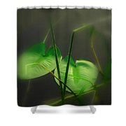 Zen Photography Iv Shower Curtain