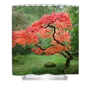 Zen Tree Shower Curtain