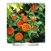 Zesty Zinnias Shower Curtain