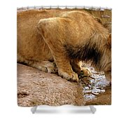Zimbabwe Shower Curtain