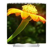 Zinnia Angustifolia Stem Shower Curtain