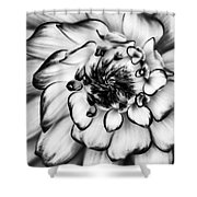 Zinnia Close Up In Black And White Shower Curtain