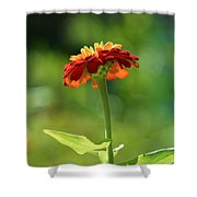 Zinnia Flower Shower Curtain