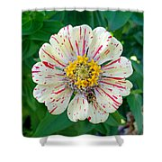 Zinnia Guest Shower Curtain