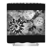 Zinnia In Black And White  Shower Curtain