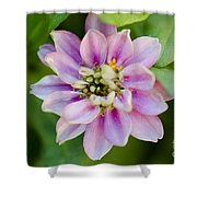 Zinnia In Pink Shower Curtain
