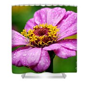 Zinnia In The Rain Shower Curtain