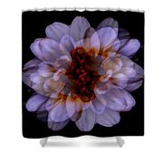 Zinnia On Black Shower Curtain