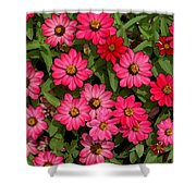 Zinnia Riot Watercolor Shower Curtain
