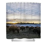Zion Mountain Ranch Buffalo Herd Shower Curtain