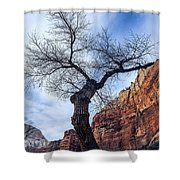 Zion Tree Woman Shower Curtain