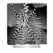 Zipper Spider - Black And White Shower Curtain