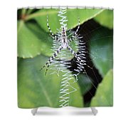 Zipper Spider Shower Curtain
