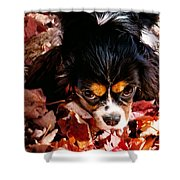 Zoeh - Look Into My Eyes Shower Curtain
