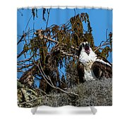 Zombie Osprey Crying For Brains Shower Curtain