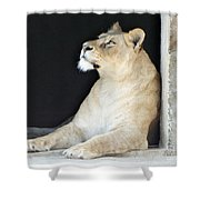 The Queen Of Animals Shower Curtain