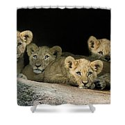 Four Cubs Shower Curtain