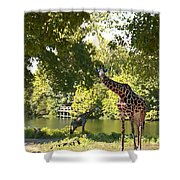 Zoo Landscape Shower Curtain