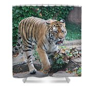 Chicago Zoo Tiger Shower Curtain