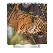 Zoo8 Shower Curtain