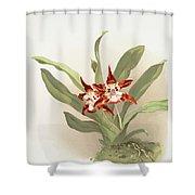 Zygopetalum Burtii Shower Curtain