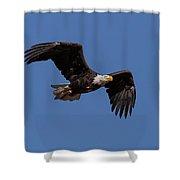 American Bald Eagle In Flight Shower Curtain
