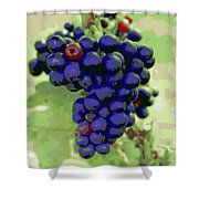 Blue Grape Bunches 6 Shower Curtain