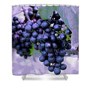 Blue Grape Bunches 7 Shower Curtain