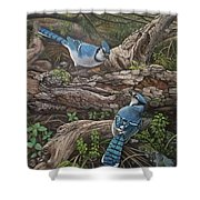 Blue Jay Stand Off Shower Curtain