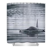 Bow Wave Shower Curtain by Randy Hall
