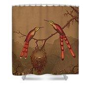 Brazilian Hummingbirds Shower Curtain