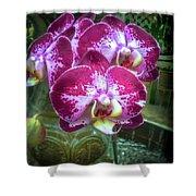 Cascade Of Orchids Shower Curtain