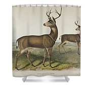Columbian Black Tailed Deer Shower Curtain