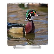 Curious Wood Duck Shower Curtain