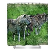 Digital Watercolor Painting Of Beautiful Timber Wolf Cnis Lupus  Shower Curtain