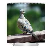 Dove On The Deck Shower Curtain