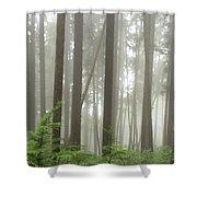 Foggy Forest Shower Curtain by Karen Zuk Rosenblatt