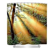1 Forest Rays Shower Curtain