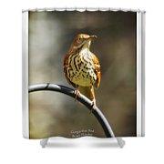 Georgia State Bird - Brown Thrasher Shower Curtain