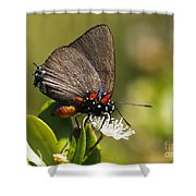 Great Purple Hairstreak Shower Curtain