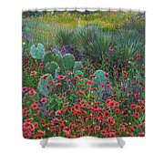 Indian Blanket Flowers And Opuntia Shower Curtain