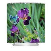 Iris In The Cottage Garden Shower Curtain