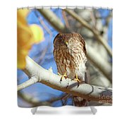 Juvenile Cooper's Hawk  Shower Curtain