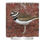 Killdeer Shower Curtain