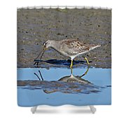 Long-billed Dowitcher Shower Curtain