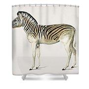 Mountain Zebra  Dauw  Illustrated By Charles Dessalines D' Orbigny  1806-1876  Shower Curtain